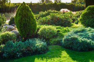 Buissons ornementaux