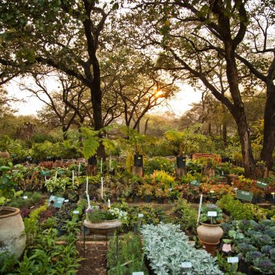 Outside Permaculture Garden Sunset