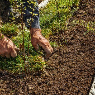 Homme posant le gazon pour la nouvelle pelouse de jardin